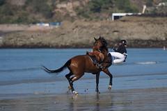 jumping d'Equy : de l'art du passage de la selle à l'eau (Patrick Doreau) Tags: jumping cheval cavalière chute eau mer erquy bretagne equitation