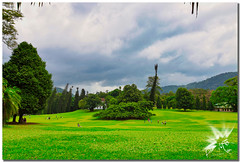 Royal Botanical Gardens of Peradeniya (UfoSp@in ஐ★Freelance Photo★ஐ) Tags: srilanka kandy kasyapamataleமாத்தளைcanon dambullaroad realjardínbotánicodeperadeniya mountains sky skyline clouds travel treasure traveling royalbotanicgardens kandymarkethall road toctoc buda dance baile kandylakeclub sapphire skyloftbyyathra botanic flores flowers monkey colors canon m50 5dmark ar colores color cliffs myself macbookpro nubes photography photoshop photo photomatrix pueblos asia india lalágrimadelaindia reflections texturas topaz textura 2018