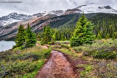 walking a Bow Lake Trail (Madonna Martin Photography) Tags: bowlake banffnationalpark alberta canada landscape mountains lake water trees snow trail