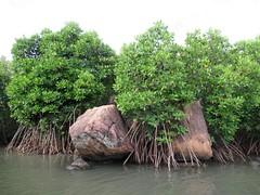 Sinnakarachchi Lagoon (D-Stanley) Tags: sinnakarachchi lagoon mangroves trincomalee tamiltiger srilanka