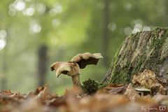 DN9A5856 (Josette Veltman) Tags: herfst autumn bos forest vechtdal overijssel