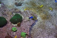 Le monde de Némo (philippe.ducloux) Tags: france finistère bretagne brittany canon 450d canon450d strictlygeotagged flickraward mywinners océanopolis brest pavillontropical poisson fish aquarium