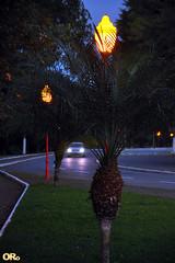 Lampposts and headlights (Otacílio Rodrigues) Tags: grama carro rua street árvores trees postes lampposts faróis headlights avenida avenue urban resende brasil oro bluehour