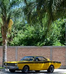Dodge Polara RT 1973 (vhillo) Tags: dodgepolarart1973 dodge polara rt frias autosclasicosargentinos