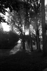 Good Morning Zaandam (selyfriday) Tags: selyfriday wwwnassiocomempty nassiocom leicacl cl leica film analogue 35mm 40mmf28 rodinal 125 20 ˙c 75minutes kentmere400 kentmere 400iso zaandam zaanstad netherlands nederland h olland dutch park morning misty trees burgermeesterinhetveldpark