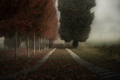 fall fog (keith[martin]working) Tags: vancouver bc britishcolumbia mountainviewcemetery mountainview graveyard cemetery light beautifullight calm perspective path red fog fallcolours fall autumnal autumn