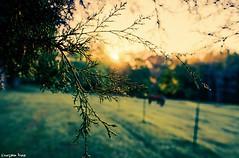 I opened (gusdiaz) Tags: sunrise morning fujifilm fuji xt2 eyes beautiful farm horses dew branches tree trees nature naturephotography sun sunrays sunny sol asoleado madrugada caballos campo bello tranquilo hermoso stunning vsco vscocam
