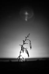 Untitled (agataurbaniak) Tags: evening sunset sun sky leica m monochrom leicamonochrom typ246 type246 246 monochromatic blackandwhite blackwhite digital rangefinder canon ltm m39 leicathreadmount 50mm 50 f14 14 canon50mmf14ltm