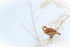 Bird (sebastienloppin) Tags: bird nature fly autumn automne oiseau sky