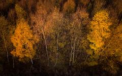 Last Autumn (Draws_With_Light) Tags: vegetation autumn landscape season skipwithcommon marshland djimft15mmf17asph djiinspire1pro northyorkshire drone tree forest camera aerialphotography scene places abstract