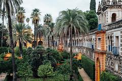 Jardín de las Damas (MikeA66) Tags: alcázarofseville andalusia europe garden palmtrees sevilla seville spain travel xt2 xf35mmf14
