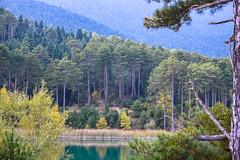 the tall team (athanecon) Tags: forrest firs firtrees korinthia corinthia feneos doxa doxalake greece countryside country mountain