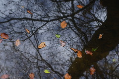 Autumn mirror (Baubec Izzet) Tags: baubecizzet pentax nature autumn leaves water mirror