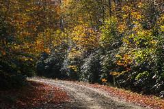 ıstranca ormanları