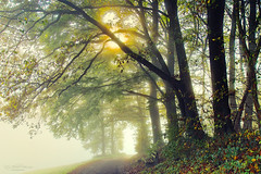 Autumn arrives (Rita Eberle-Wessner) Tags: forest wald wood forestpath waldweg bäume trees bench bank wiese meadow nebel fog autumn herbst fall sonne sun landschafrt landscape grün green mist neblig foggy misty laub leaves odenwald
