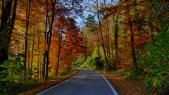 rafz_06_03112016_14'01 (eduard43) Tags: herbst jahreszeiten bäume blätter farben stimmung mood 2016