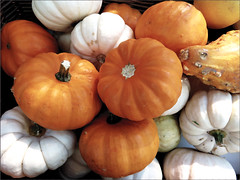 Pumpkins (Mary Faith.) Tags: pumpkin vegetable orange health closeup