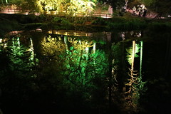 2018 - 4.10.18 Enchanted Forest (136) (marie137) Tags: forest lights trees show marie137 bright colourful pitlochry treeman attraction visit entertainment music outdoors sculptures wicker food drink family people water animation