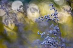 Yellow and gray autumn. (agnieszka.a.morawska) Tags: beyondbokeh bokehlicious bkhq helios44m helios october jesień autumn bokeh dof