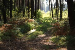 *** (pszcz9) Tags: przyroda nature natura naturaleza las forest forestimages droga road pejzaż landscape jesień autumn fall beautifulearth sony a77