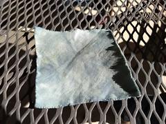 2018-10-11 10.51.25 (tdpigg) Tags: natural dye ewg study group