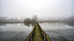 swamp (Roberto.Trombetta) Tags: italy venice fiume fog river winter still venezia veneto lagoon laguna swamp stagno lago lake water path acqua parco park reflection sony 7rii alpha batis225 batis zeiss 25 carlzeiss art fineart amazing stunning beautiful landscape paesaggio 7rm2 allaperto romantic tree forest peaceful cloudy albero cielo calma quiet calm wood wooden mist haziness misty bare bank naked spoglio foschia erba campo bridge italia