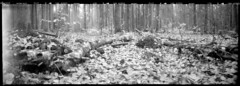 Woods means life (cotnari73) Tags: rss6x17 pinhole nolens acros d76 woods forest sweden nature