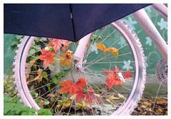 rainy day autumn bike (mcfcrandall) Tags: montreal rain leaves autumn decorated painted pink umbrella alley ruelleverte