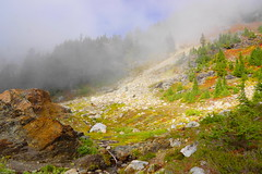 Avalanche Area (AdagioatMSN) Tags: yellow aster butte mountbaker fallcolors hiking