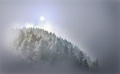 opale (art & mountains) Tags: alpi alps valsassina bosco abeti nevicata atmosfera mood natura silenzio contemplazione clima stagione vision dream spirit hiking respiro armonia anima