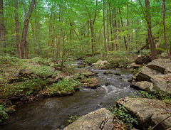 Beaver Brook at Wildcat Ridge (Dave Landry) Tags: northamerica flickr places newjersey unitedstates rockawaytownship fall wildcatridge morriscounty america us usa unitedstatesofamerica