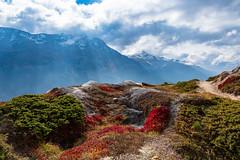 Herbstwege / Autumntrails in Engadin (jaaserud13) Tags: engadin herbst jaa nikond500