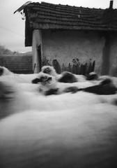 Bosna   Huawei P20 Lite (Eldar.Spahic) Tags: bosnaihercegovina bosnia sheeps mobilephonephotography blackandwhite huawei