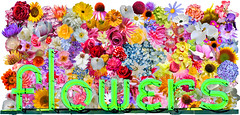flowers ll (pbo31) Tags: bayarea california color pattern october 2018 boury pbo31 fall alamedacounty eastbay flowers neon sign shop florist bloom flora green nature season alameda historic letters script pink mosaic collage