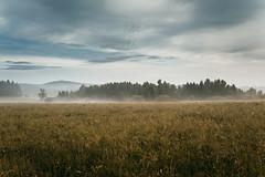 Early morning haze (desomnis) Tags: southbohemia südböhmen nature landscape landscapephotography landschaft landscapes morning morninglight fog mist misty mists haze tschechischerepublik tschechien czechrepublic cloudysky clouds naturephotography 5d canon5dmarkiv canon5d 35mm sigma35mmf14dghsmart sigma35mm sigma35mmf14 sigma35mmf14art desomnis