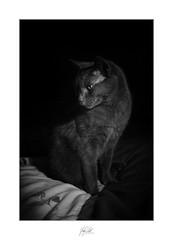Midnight pose (AnthonyCNeill) Tags: cat chat katze gato animal pet tier haustier cute süss mono monochrome black white schwarz weiss noir blanc blanco negro schwarzweis fujifilm fuji x100f acros filmsimulation tomcat lowkey clavebaja