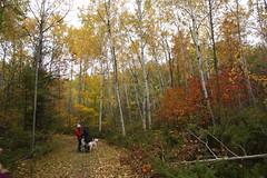 IMG_6333 (sjj62) Tags: fishcreekwi doorcountywi fall autumn woods doorcounty fishcreek 40d