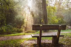 Dispersion (NVOXVII) Tags: light bench trees nature quiet peace serene autumn nikon sunlight mist dispersion rays october woodland morning walking fall