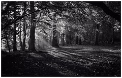 Linslade, near Rushmere (Pauls Pixels) Tags: flickr 1000 allcontent