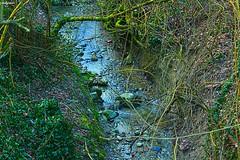 un pò d'acqua (archgionni) Tags: natura nature rami branches foglie leaves acqua water ruscello stream verde green pietre stones