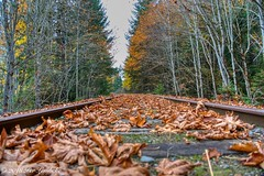 Shawnigan Rail Series (Per@vicbcca) Tags: sony ilce7m2 a7ii railway rails rail shawniganlake britishcolumbia vancouverisland canada autumn fall color colores colour enrailway maple leaves