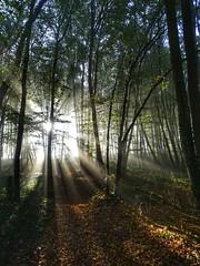 De nouveaux jours pleins de lumière nous attendent (voyageurrr) Tags: lumière light день рассвет природа солнце лучи лес las natura natur nature wood foret bosco bois forest manana day jour leverdusoleil aube sunrise morning soleil sole sun sol sunrays rayonsdusoleil rayons rays france sunbeam