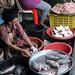 fish -  Mae Klong Railway Market (Talad Rom Hub), Bangkok, Thailand 2018