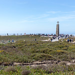 Küstenvegetation am Cabo da Roca thumbnail