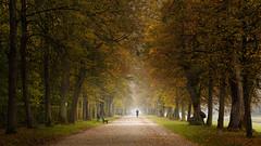 IMG_3403 (Calabrones) Tags: deutschland oberbayern bayern schlossparknymphenburg münchen herbst morgen nebel morgennebel bäume herbstlaub mignonbergeroswald