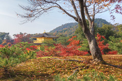 Kinkakuji (arbivi) Tags: autumn fall foliage koyo momiji japanese maple tree red orange kinkakuji temple kyoto japan canon 60d tamron arbivi raymondviloria