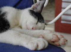 Maca (roksoslav) Tags: postira brač dalmatia croatia 2018 nikon nikkor28mm135 maca kitty