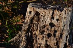 DSC_0050 (mikkelskytte10) Tags: wood tree forrest nature