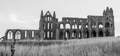 Dracula's Hangout 2 (1 of 1) (DXW1978) Tags: raw fz82 fz80 lumix panasonic abbey whitby sky grass building bridge landscape field ruins viaduct road