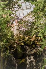 DSC_2447 (juliabruns) Tags: goddess portrait portraitsession portraiture seniorsession fantasy creative creativephotography weddingphotography fantasyphotography magic libra god spiritual spring awakening autumn october birthday 18 teenager